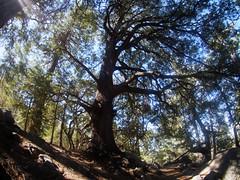 Idyllwild: Ernie Maxwell Scenic Trail