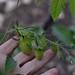 June 2017 polyculture garden update - 25