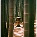 Kamakura bamboo groove
