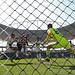 O CRÉDITO DA FOTO É OBRIGATÓRIO: Vítor Silva/SSPress/Botafogo by Botafogo F.R.