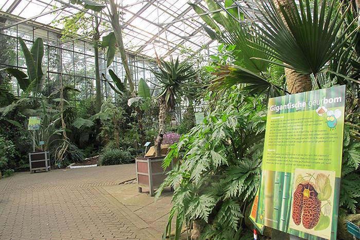 Utrecht-Botanische-Tuinen-4