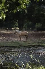 """Caballo """"enmarcado"""" en el rio Bullaque"""