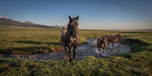 horses ranch cowboys cowgirls outside outdoors landscape mountains westcliffe sangredecristomountains nikon nikond750 western colorado