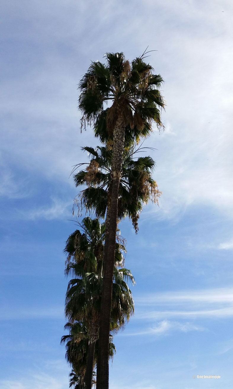 Palmuja, Los Angeles, Kalifornia, USA