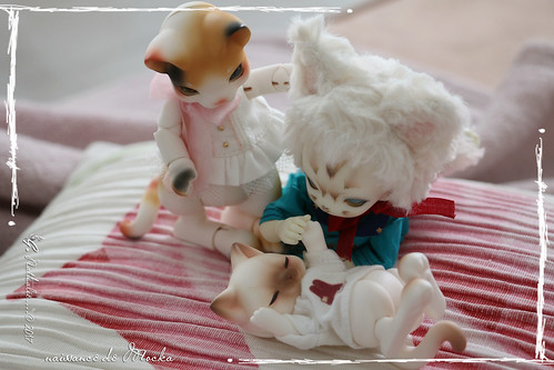 ✰ Ma famille de kitsune (p. 20) - Page 12 35250785170_4bd74f0264