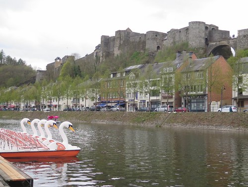 Swans on the Semois