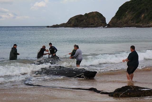The Sea Mullet Run - Black Head Beach, Hallidays Point, Mid North Coast, NSW