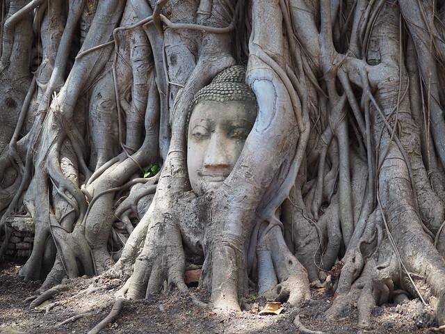 P6222657 ワット・マハータート(Wat Mahathat/วัดมหาธาตุ) アユタヤ タイ thailand 世界遺産