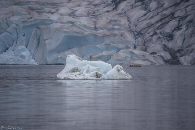 Mendenhall Iceberg 426, Nikon D750, Sigma Macro 50mm F2.8 EX DG