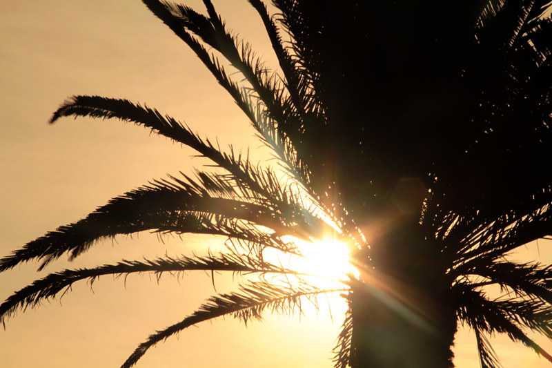 Palme im Sonnenlicht