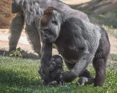 Baby Leslie and mom Kokamo