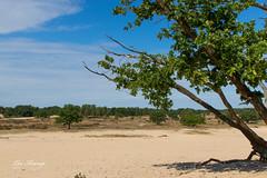 Loonse & Drunense duinen