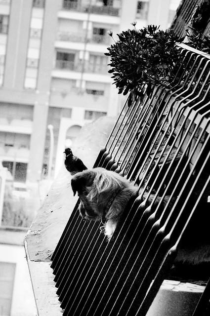 Animals & the city II, Nikon D90, AF-S DX Zoom-Nikkor 18-70mm f/3.5-4.5G IF-ED