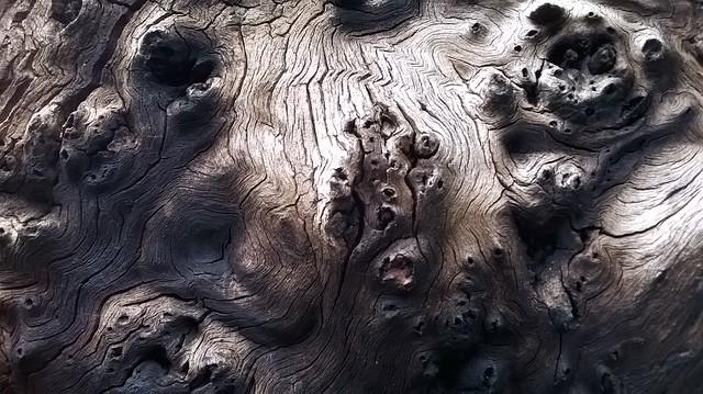 Tree Bark 05