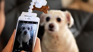 【FLEXY PAW】吸引寵物注意力的好幫手~輕鬆拍出讓毛小孩們「看著鏡頭」的可愛照片!!