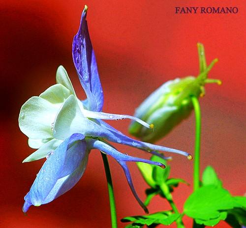 Autor: Clic - Fany Romano
