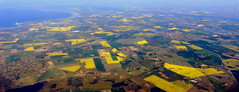 May is the month for rapeseed