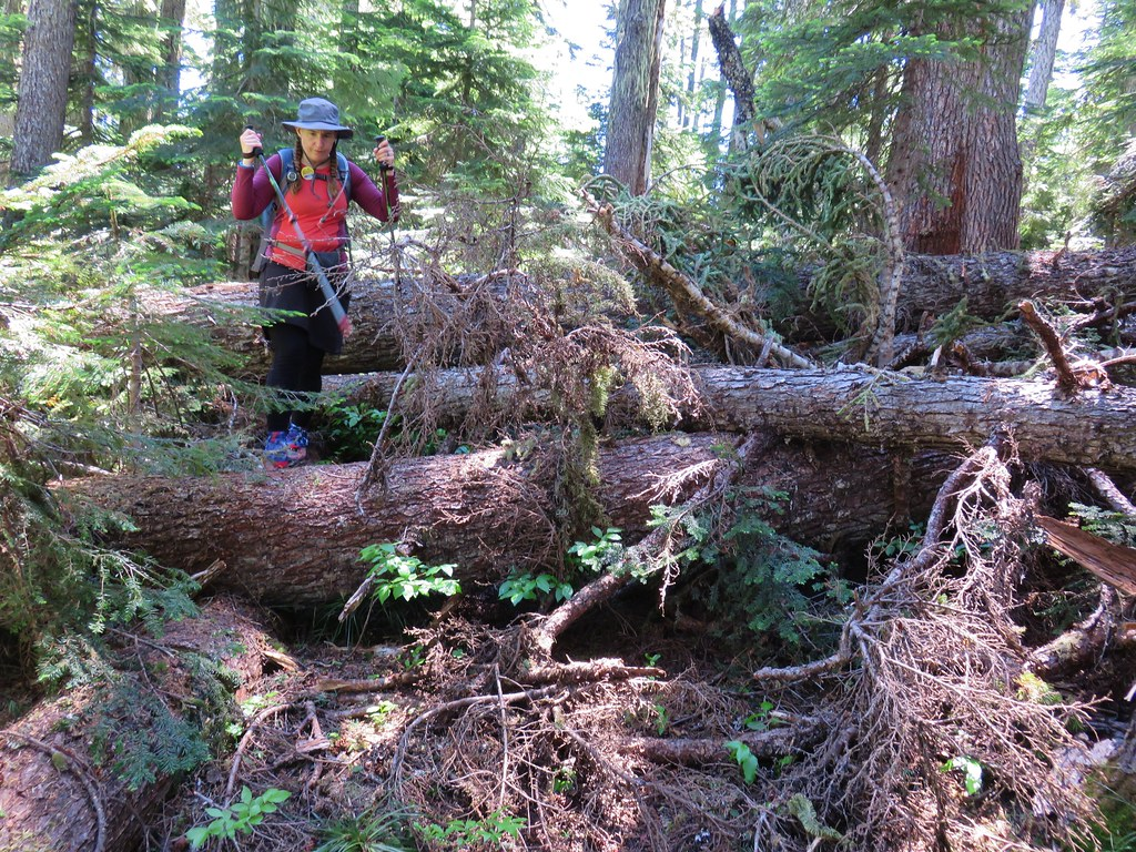 Blowdown over the Rho Ridge Trail