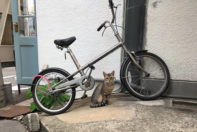 Today's Cat@2017-07-08