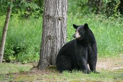 Bears-7