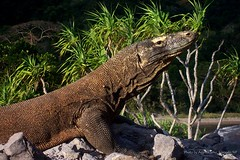 Book deal Komodo Adventure Tour