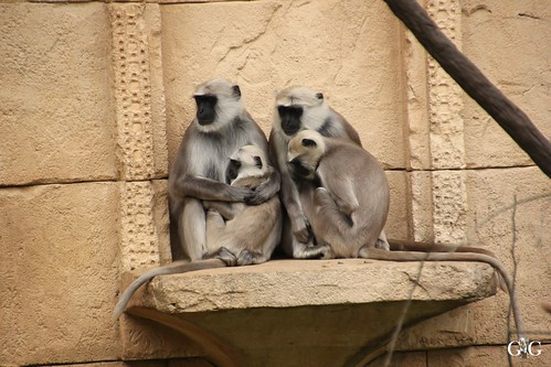 Besuch Zoo Hannover 24.06.201758