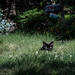 Black Cate in the Grass