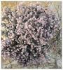 Ericosum suffruiticosum