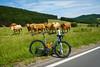 Rennrad und Fans