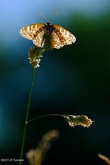 lumière dans les ailes