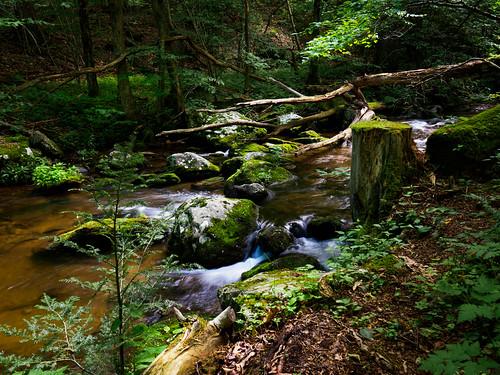 moss rock usa longexposure landscape virginia rapidan nature water stream leaf shenandoahnationalpark lowlight tree lichen mountain leaves