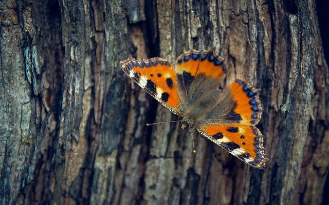 butterfly-6994