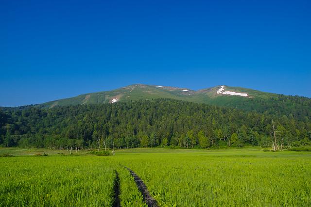 至仏山を見上げる@研究見本園