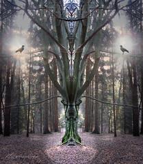 Gespiegelte Bilder - Bäume - Natur