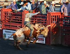 Ride 'em  Cowboys