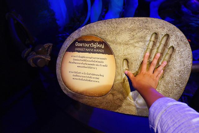 มือชาวนาวีผู้ใหญ่