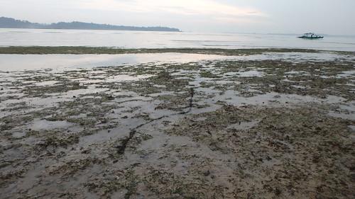 Abandoned fishing lines on Changi