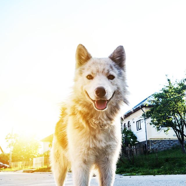 Random Dog, Sony SLT-A58, Sony DT 18-55mm F3.5-5.6 SAM II (SAL18552)