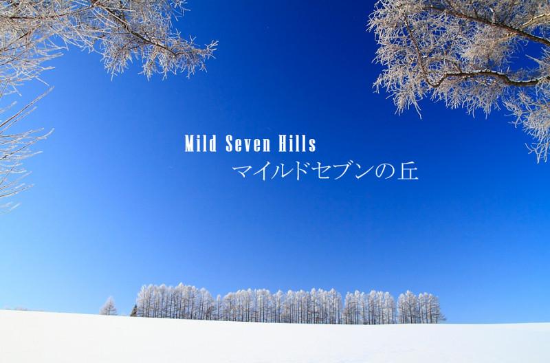 美瑛景点推荐 Mild Seven之丘 (23)