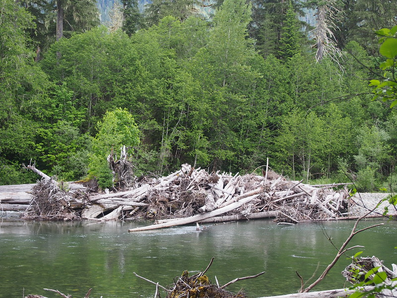South Fork Stillaguamish River