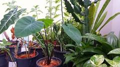 My balcony garden- Dehiwala