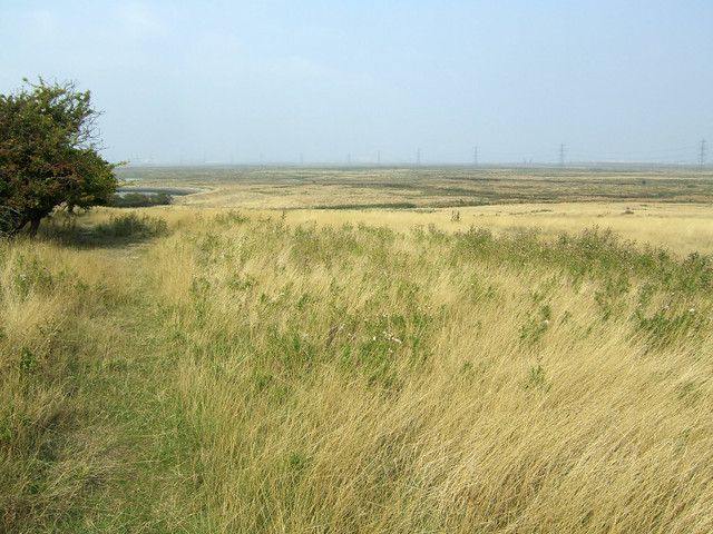 Raspberry Hill near Iwade