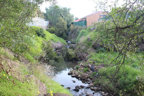 Creek gorge looking towards Sydney Road - 100 photos of Merlynston Creek