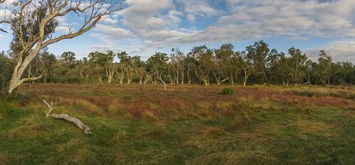 Tuart forest NP