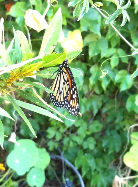20170622_Monarch