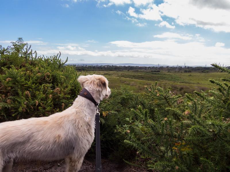 Teddy likes to gaze across the open heath