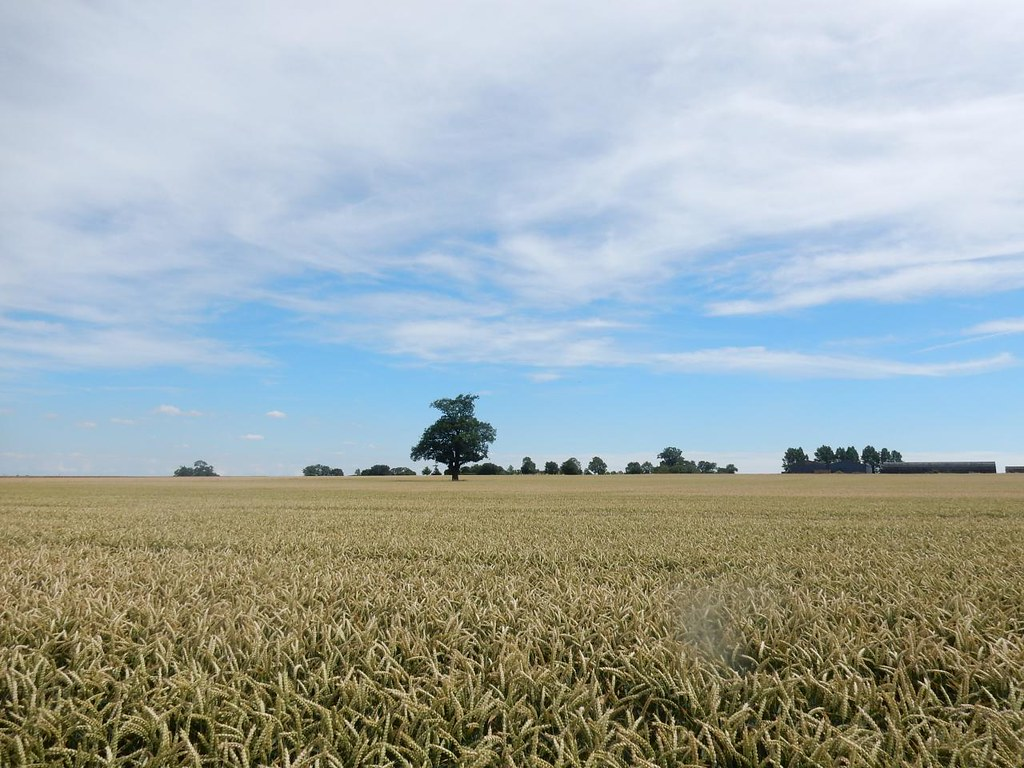 Lone tree Ely Circular