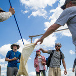 Eric Rundquist, a KU Alumn and local naturalist, and students carefully bag a rattlesnake.