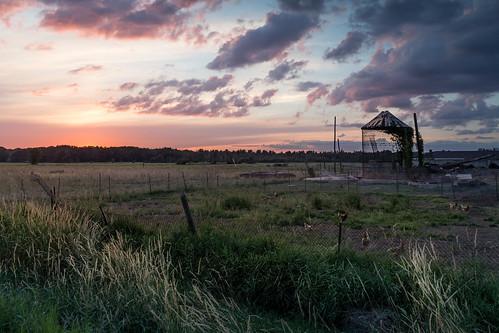 canoneos5dmarkiv ef24105mmf4lisusm freerange chickens silo crib farm sunset sundown evening atardecer campo granjero mi michigan midland midmichigan odd