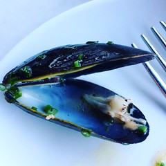 Mussel pulled, shell stands alone